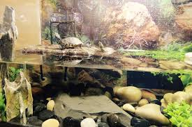Turtle Tank Decor 10 Gallon Turtle Tank Youtube