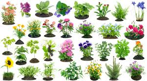 stock photo various garden plants and flowers grow on the soil compost heap collage set isolated