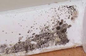 black mildew in shower shower mold and mildew how to get rid of mold and mildew black mildew in shower