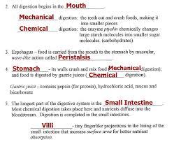 15 Digestive System Worksheets, Digestive System Worksheet Human ...