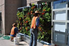 living walls and vertical gardens made easy with free standing self watering units learn more