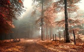 Autumn wallpaper hd, Autumn forest ...