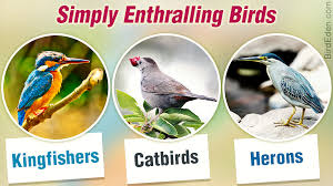Birds Chart With Names In English Different Types Of Birds