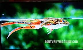 sharp 90 inch 4k tv. sharp lc-90le657u 90 inch 4k tv