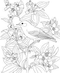dd7907f5f73af26d24f3a808b12b9aa8 idaho state bird and flower free printable coloring page idaho on creative coloring birds