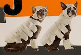 Mummy Pet Dog Costume White With Hood And Leg Warmers