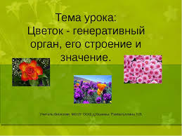 презентация и конспект урока в классе на тему Цветок  слайда 1 Тема урока Цветок генеративный орган его строение и значение Учитель био