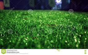 grass field at night. Green Grass Background. Stadium Night. Soccer Field Stock Video - Of Grass, Lawn: 73485281 At Night