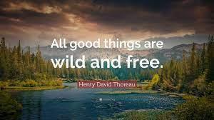 Top 30 Nature Quotes (2021 Update ...