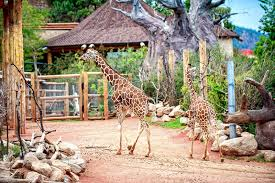 Image result for cheyenne mountain zoo
