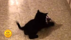 <b>Черные</b> кошки <b>приносят</b> удачу (24.11.15) - YouTube