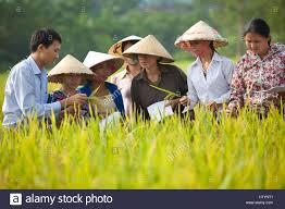 Asian farmers in arkansas