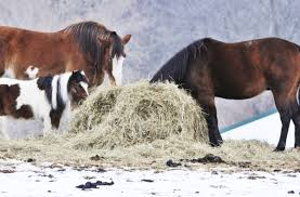 Round Bale Weight Chart Tips On Purchasing Large Round Bales Of Hay For Horses The