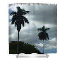 Palm Trees Shower Curtain for Sale by Petra Smith