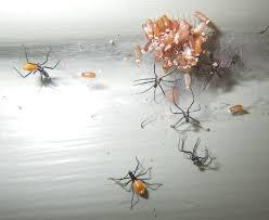 Tiny Black Ants Kitchen Tiny Ants Florida