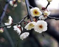 梅 の 別名 は 花 の 何