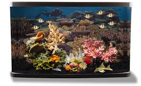 petsmart animals fish. Modren Petsmart Coral And Petsmart Animals Fish Y