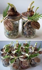 DIY Christmas Gifts In Mason Jars  Diy Holiday Gifts Plants And Christmas Gift Plants