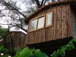tree house jaipur. The Tree House Resort - Jaipur D