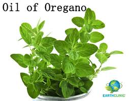 Image result for oregano oil