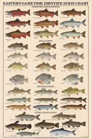 Freshwater Fish Chart Eastern Game Fish Identification Posters Posters