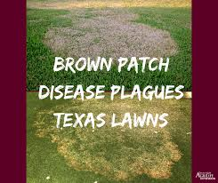 Brown Patch Disease Brown Patch Diseases Plague Texas Lawns In Cool Wet September