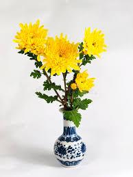Download Chrysanthemum flower vase stock photo. Image of leaf - 27541612