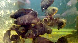 Fish Tank Wallpaper Hd For Aquariumfish Youtube