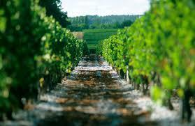 2011 Vintage Guide For Bordeaux Decanter