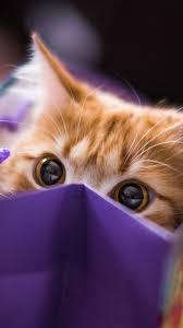iphone wallpaper hd cute. Plain Iphone Cute Cat Eye Wallpaper IPhone And Iphone Hd E