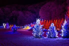 Outside Trees With Lights How To Install Safety Christmas Lights On Outdoor Trees