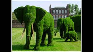 Topiary - the art of shaping trees & shrubs into art forms ~ courtesy of  Pinterest - YouTube