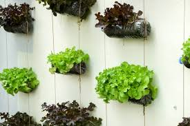 Small Picture 5 DIY Vertical Garden Ideas For Your Home