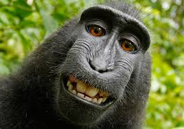 Image Eye monkey Selfie Case Photographer Wins Two Year Legal Fight Against Peta Over The Image Copyright The Independent Monkey Selfie Case Photographer Wins Two Year Legal Fight Against