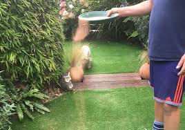 how to eliminate the smell of dog urine from artificial grass