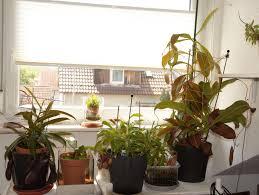 Fensterbank Im Laufe Der Zeit Nepenthes Gesellschaft Für