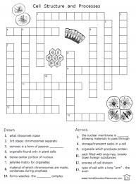 Plant Cell Structure And Function Worksheet in addition  together with Cell Wall Function   Bing Images   Biology   Pinterest   Cell also Cell Structure and Functions as well Chapter 7 Cell Structure And Function Worksheet Answers   28 furthermore This is your worksheet for the Unit 4 IP  You will find that there together with Chapter 4 Cell Structure  1    4 CELLSTRUCTUREAND FUNCTION moreover Cell Structure And Function Worksheet Answers   cell structure and additionally Module cell structure and function furthermore cell organelles worksheet   Endoplasmic Reticulum   Cell  Biology likewise . on cell structure and function worksheet