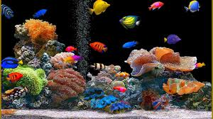 Animated Desktop Wallpaper Fish ...