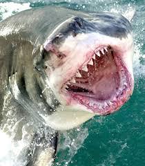 Tiburón maltrata joven en Hawai [2do ataque en 6 días]