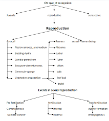 Reproduction Flow Chart Sexual Reproduction Human
