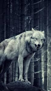 Wolf wallpaper iphone 5 animals wolf ...