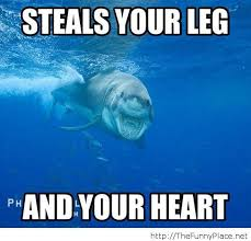 Funny Shark Memes on Pinterest | Shark Meme, Sharks and ... via Relatably.com