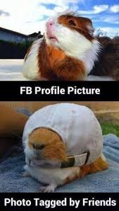 17 best ideas about fb profile christmas images for fb profile picture vs tagged photo