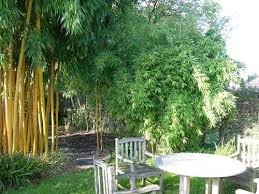 Small Picture Top 20 Bamboo Garden Design Seattle Peeking Through Bamboo