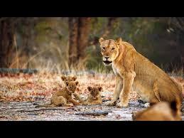 a lioness mom confronts a tresper to