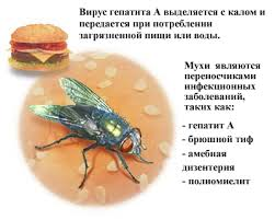 Картинки по запросу Гепатит А