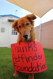 Summer Thank You Arizona Dogs Say Thank You For Summer Cooling Grant Petfinder