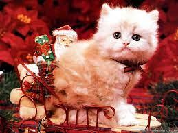 Christmas cats, Christmas animals, Cat ...