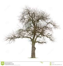 bare apple tree clipart. royalty-free stock photo. download bare branched apple tree clipart