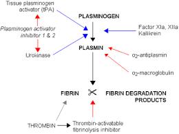 Coagulation Of Blood Flow Chart Hemostasis Boundless Anatomy And Physiology